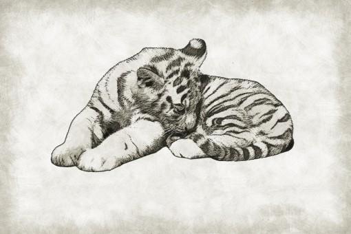 25+ Sketsa gambar hewan panda hitam putih terbaru