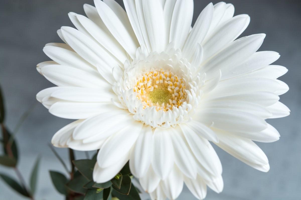 free images black and white leaf petal bloom summer pollen