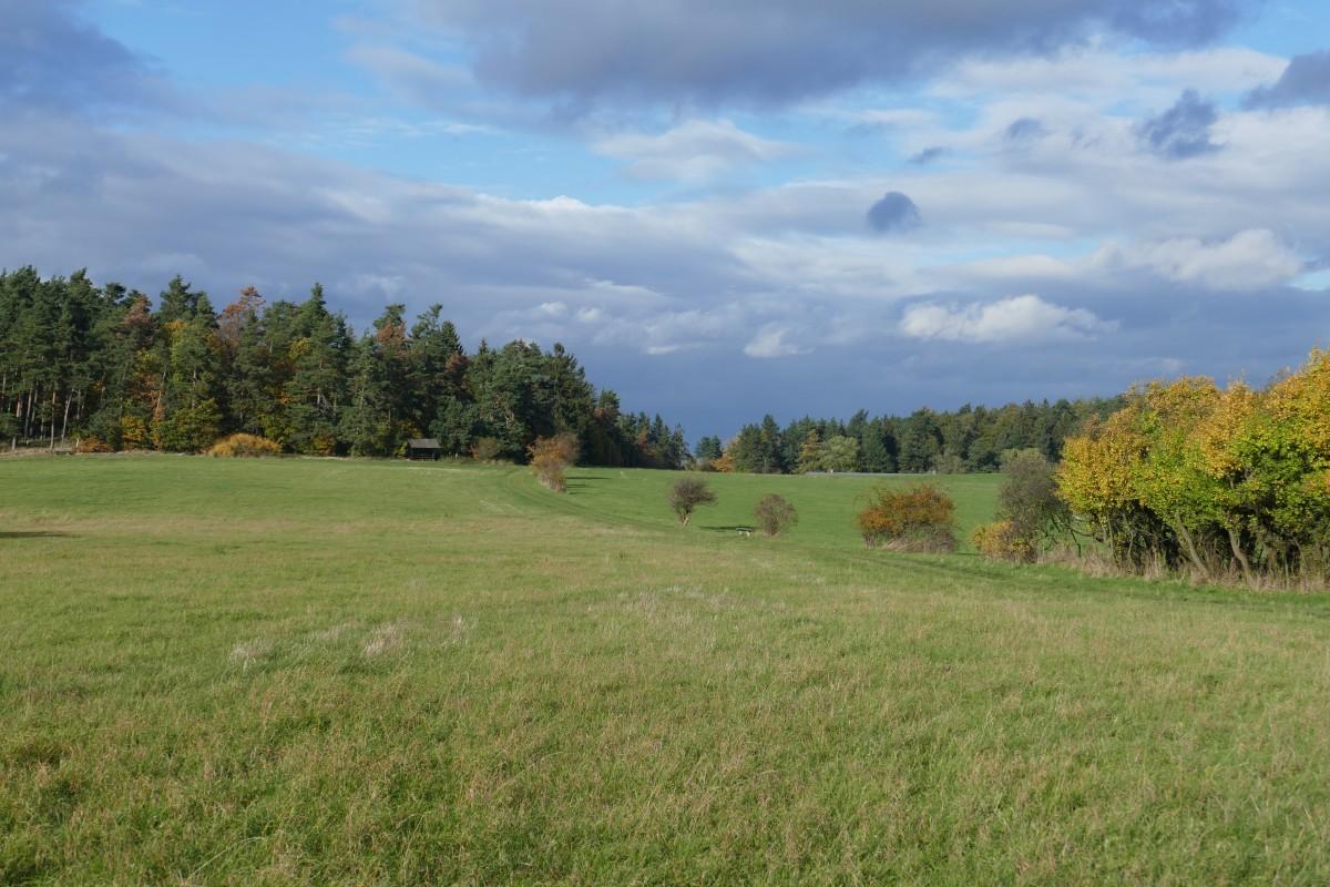 Free Images   Landscape  Tree  Forest  Horizon  Mountain