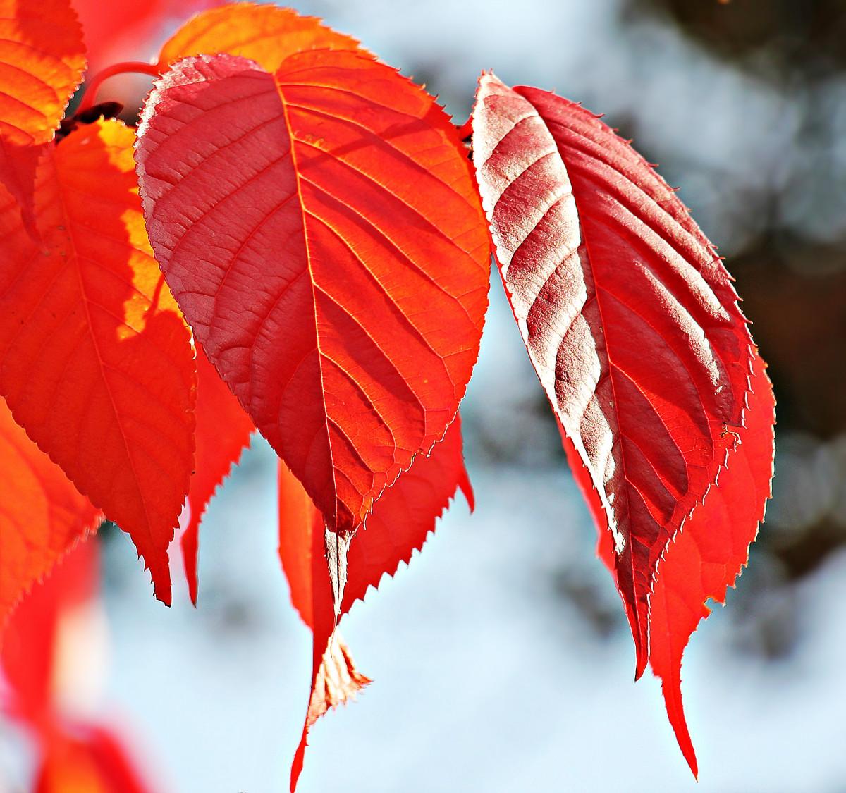 фото осенних листьев деревьев с названиями этому