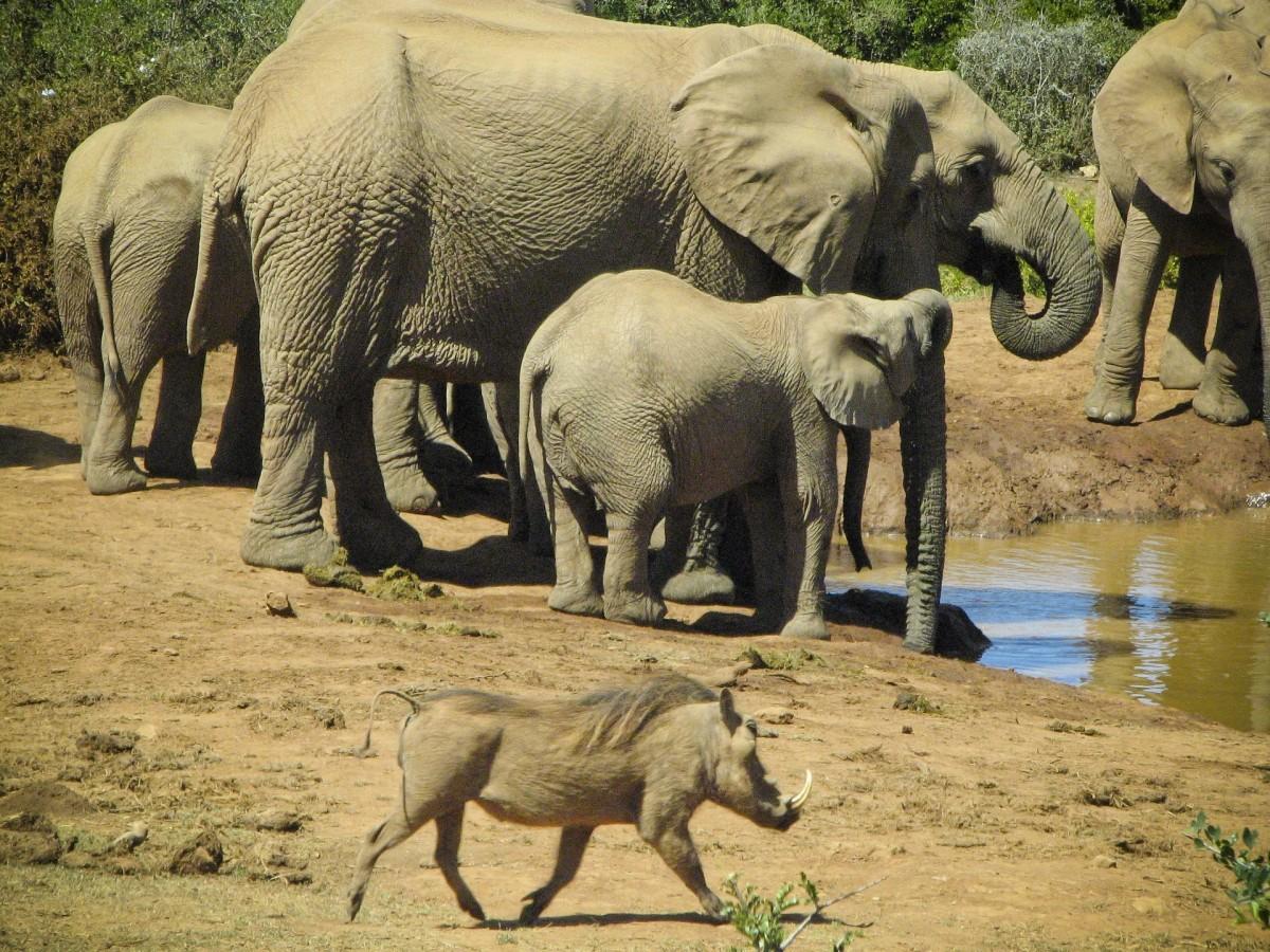 кованых козырьков если слоны в южной америке трехкомнатную квартиру Советского