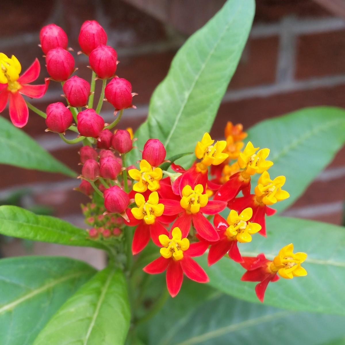 Free Images Leaf Flower Orange Produce Evergreen
