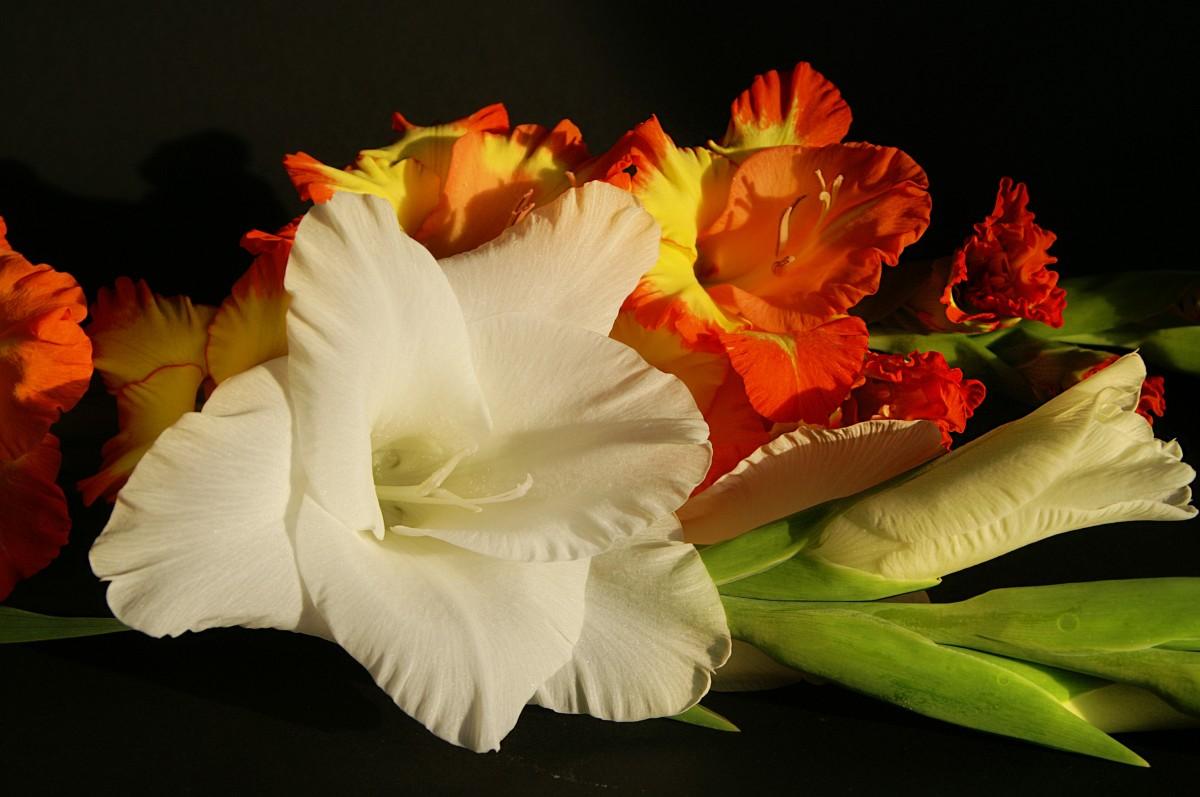 спиц картинки гладиолусы цветы букеты калифорния микс свежих