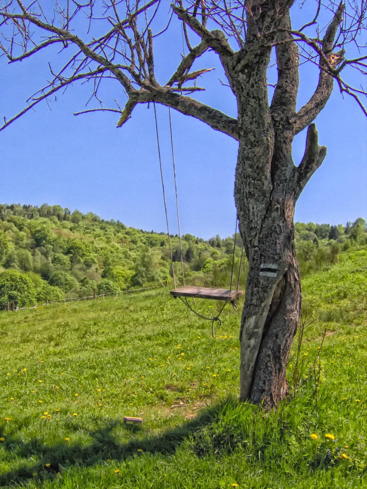 images gratuites paysage arbre la nature herbe plante prairie campagne colline fleur. Black Bedroom Furniture Sets. Home Design Ideas