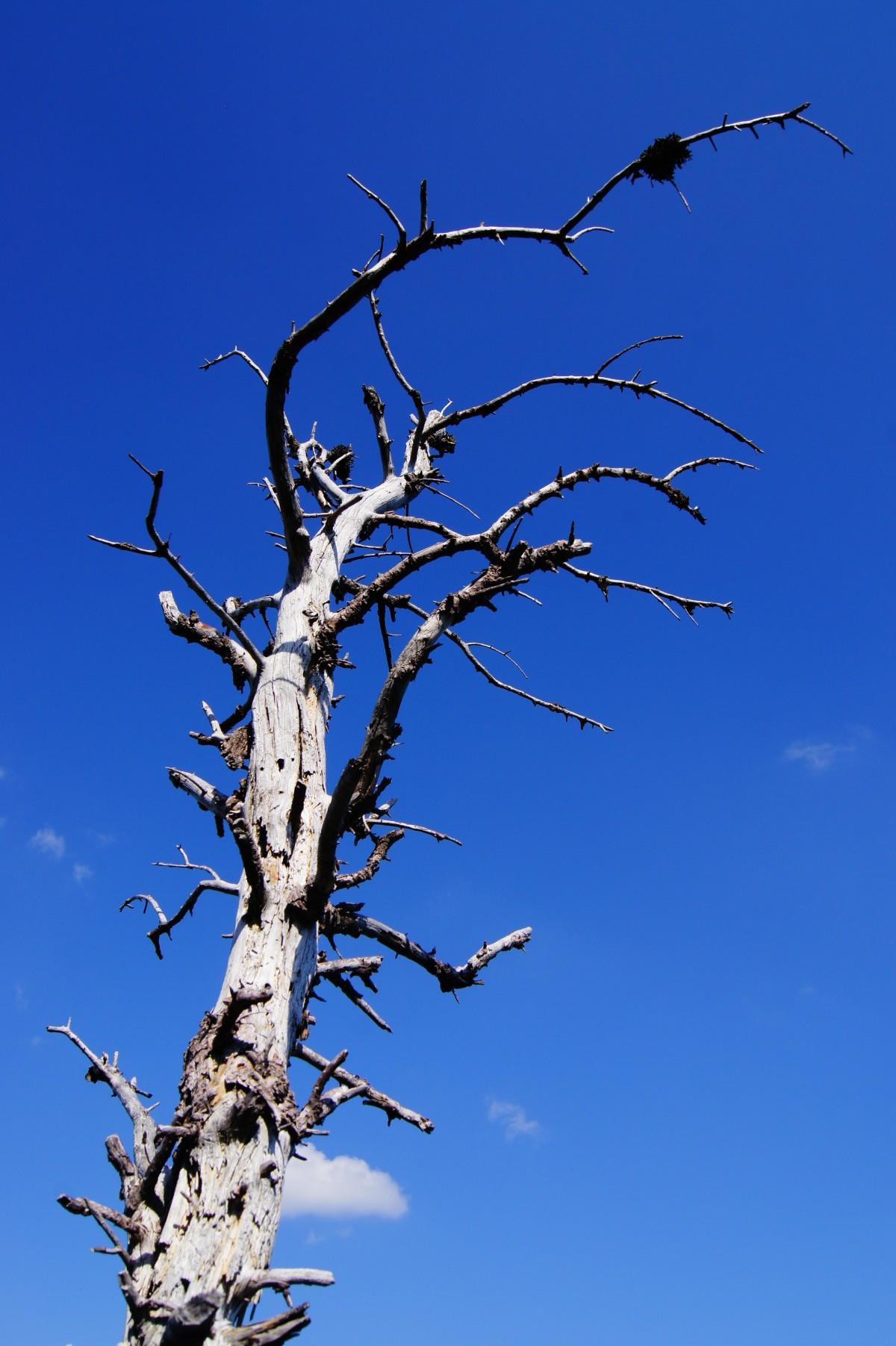 Hedelmätön Puu