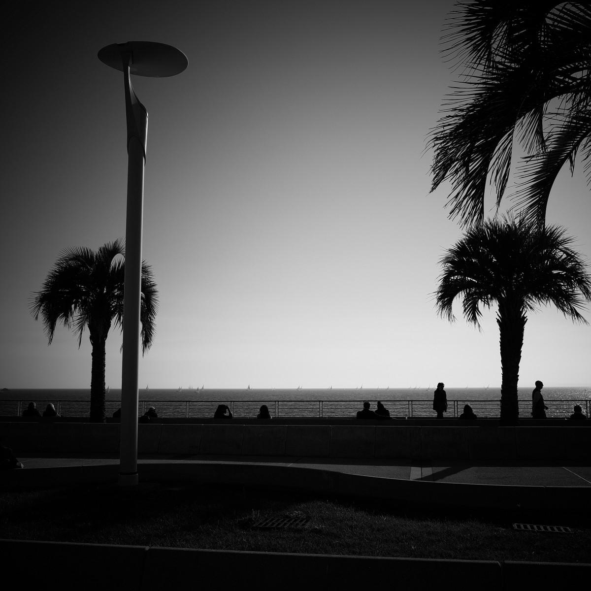 무료 이미지 : 나무, 실루엣, 구름, 검정색과 흰색, 건축물, 하늘 ...