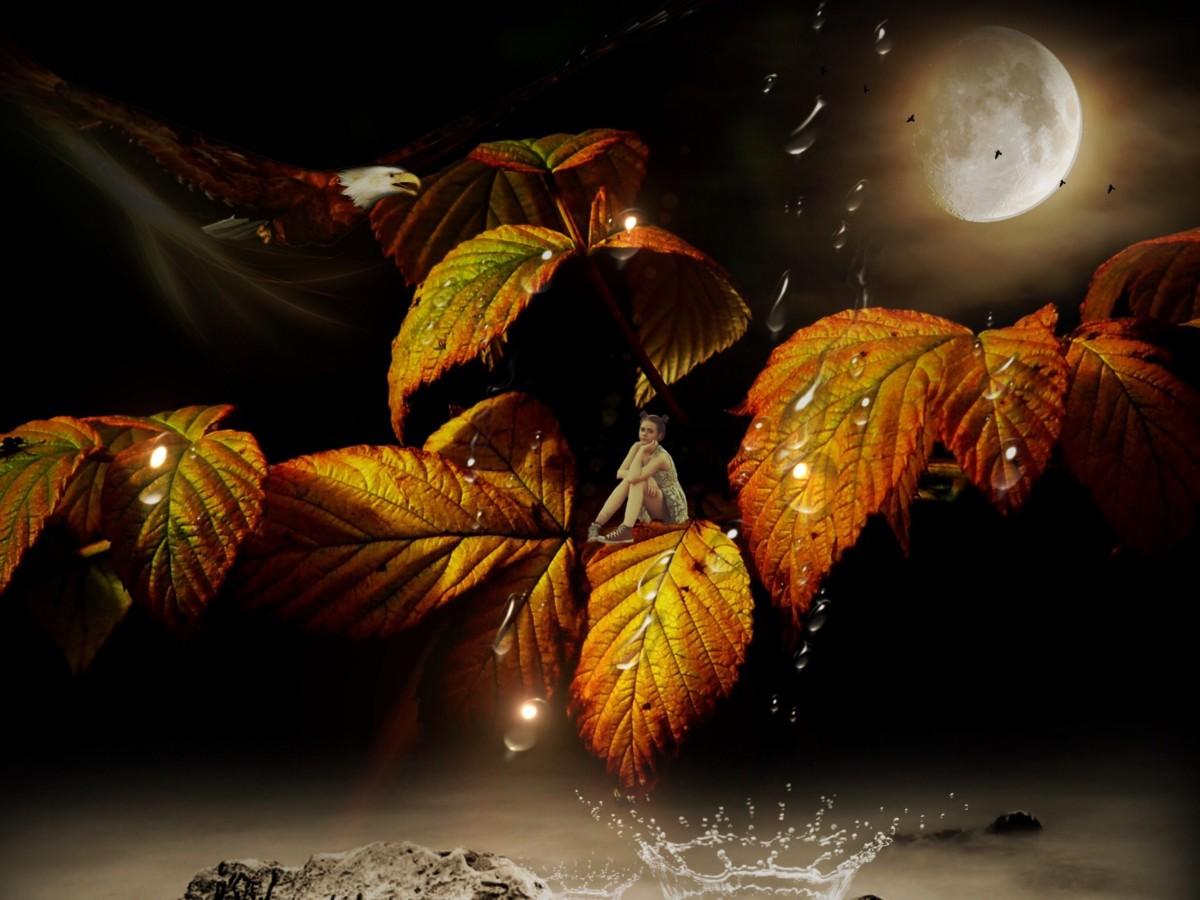 Kostenlose foto : Baum, Wald, Ast, Licht, Mädchen, Nebel, Nacht ...