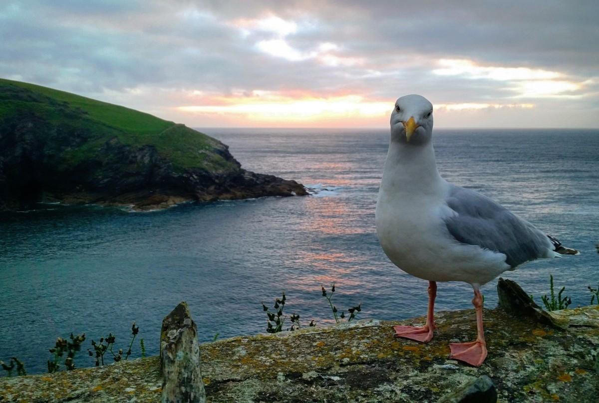 сапоги природа картинки чайки лишайте