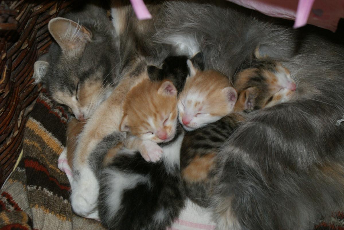 kostenlose foto  niedlich kätzchen baby haustiere
