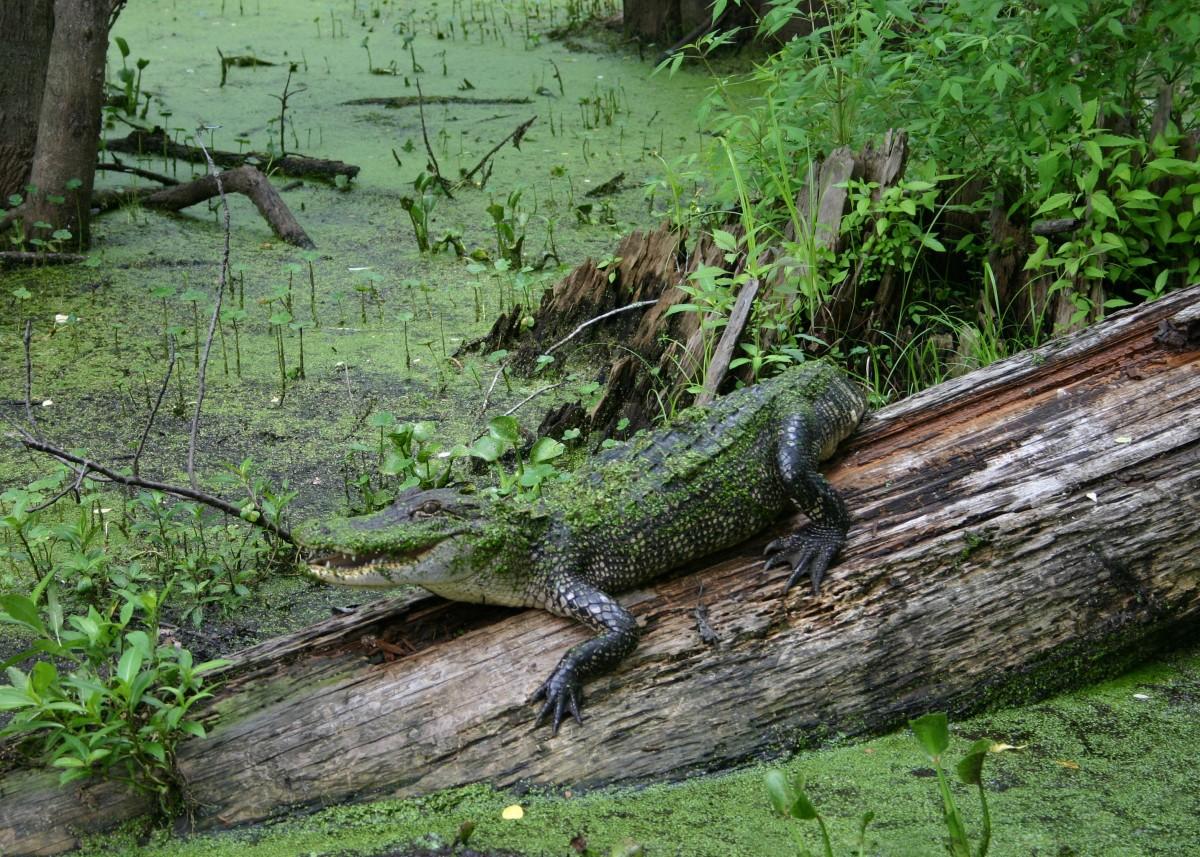 Reptiles-habitan-zonas-tropicales
