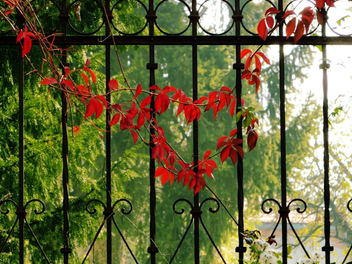 images gratuites arbre la nature for t branche cl ture plante lumi re du soleil feuille. Black Bedroom Furniture Sets. Home Design Ideas