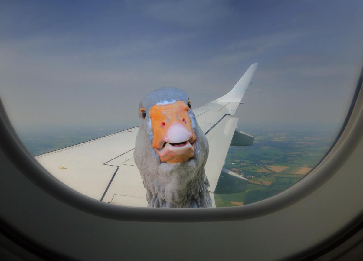 Картинки прикольные самолет