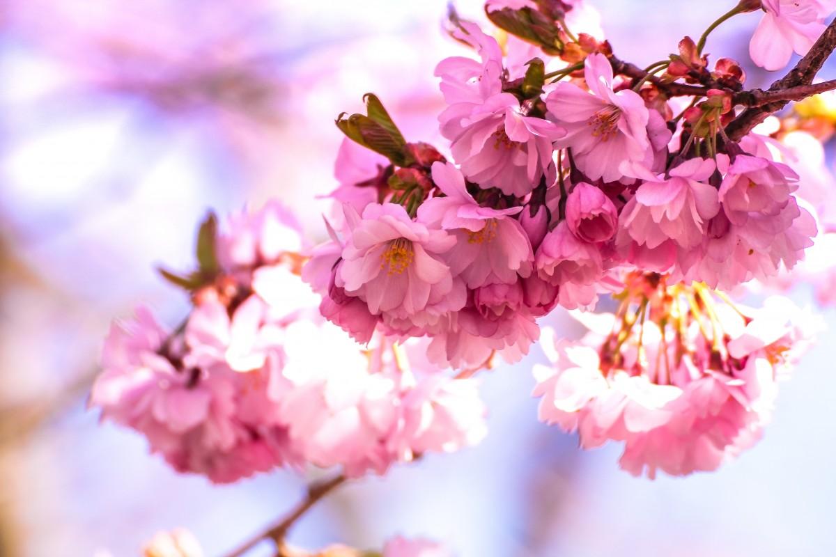 Расцвела как розовый букет, цветов атарбекова краснодар