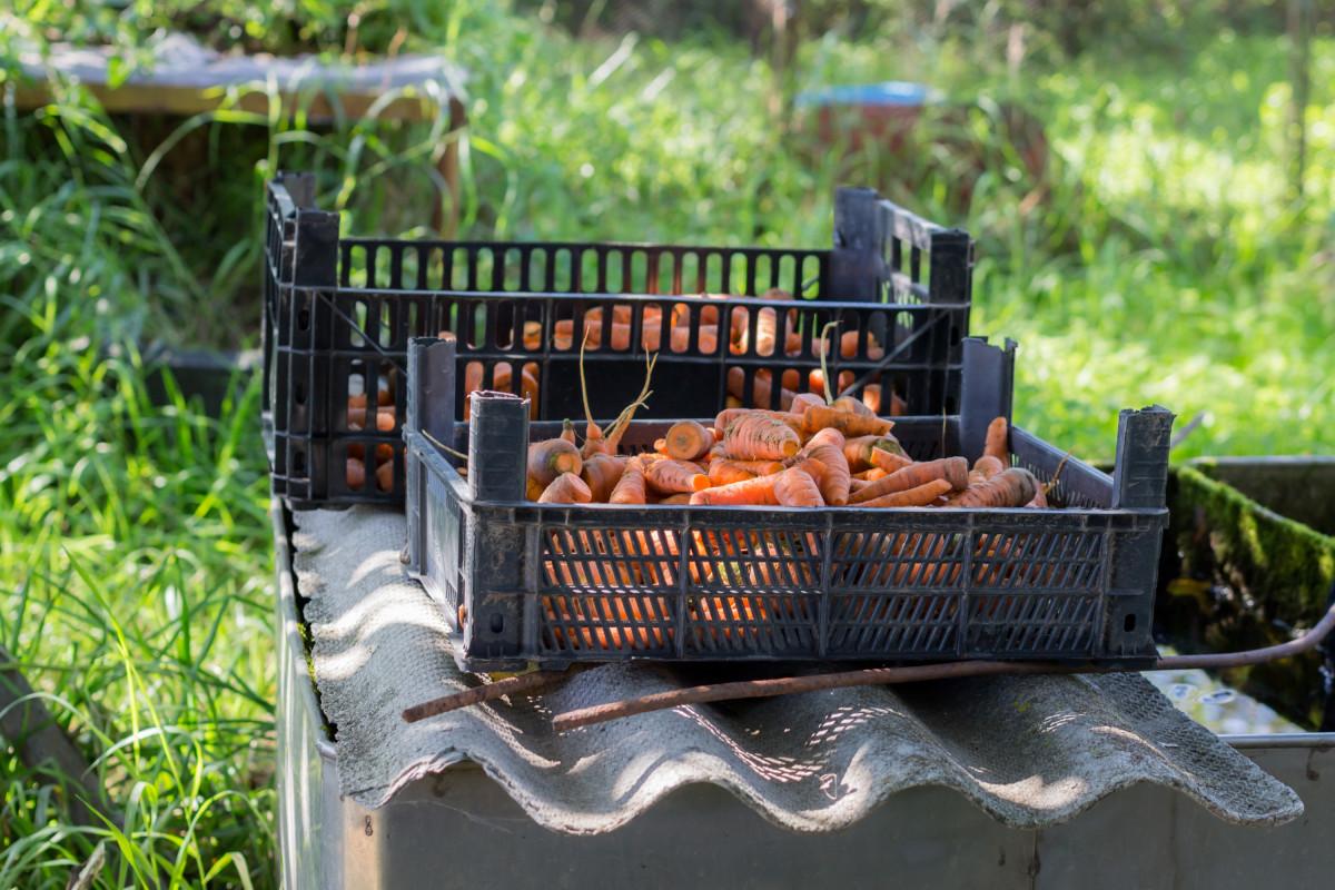 Fotos gratis c sped verano estanque plato patio for Barbacoa patio interior