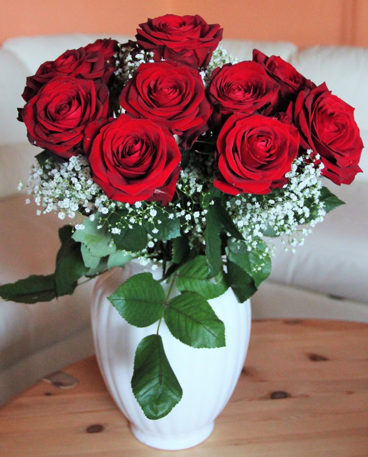 Images gratuites fleur p tale amour rouge rose for Fleuriste rose