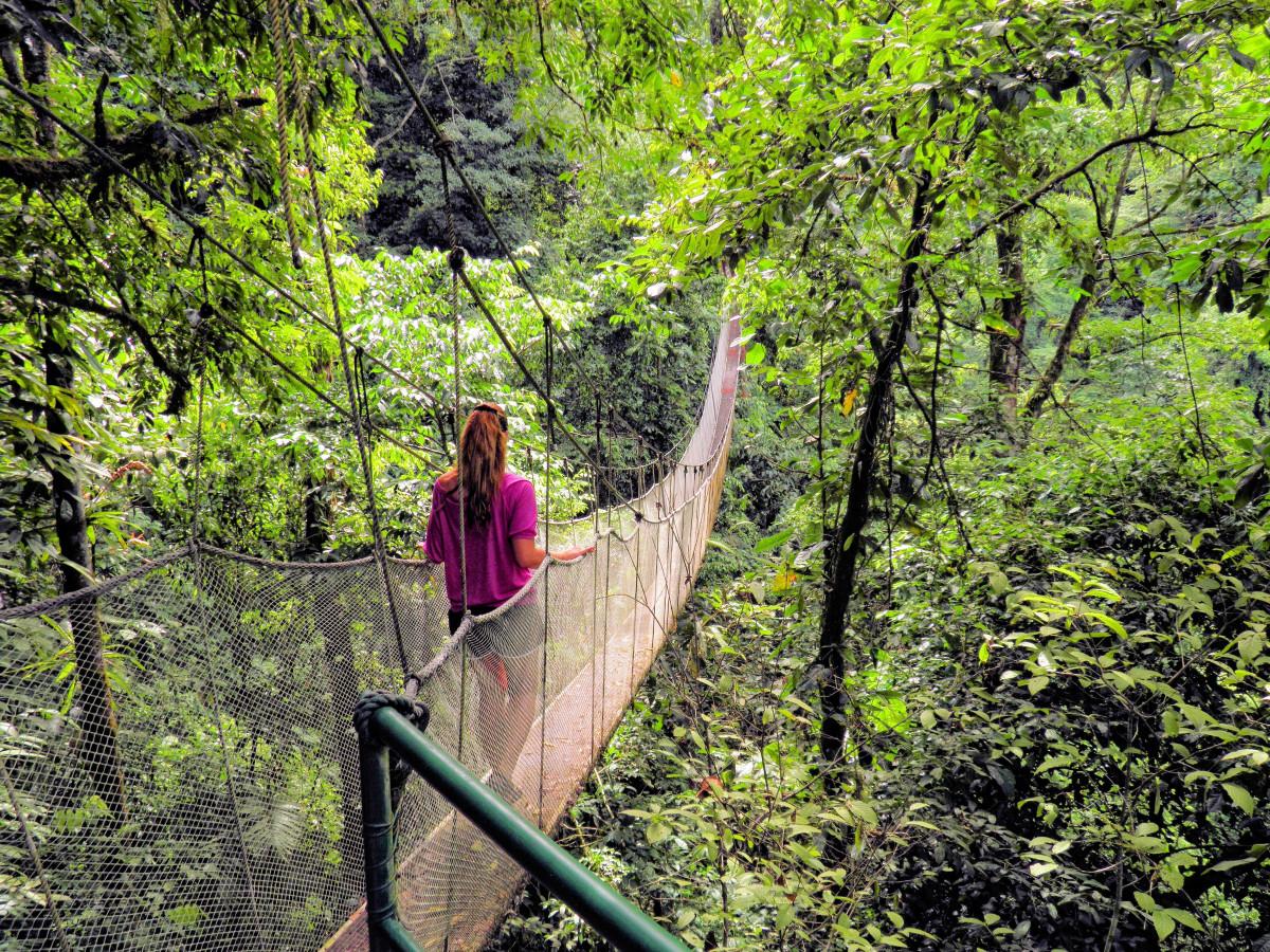 Gratis afbeeldingen bos hangbrug oerwoud regenwoud touwbrug leefgebied wandelen brug - Leefgebied canape ...