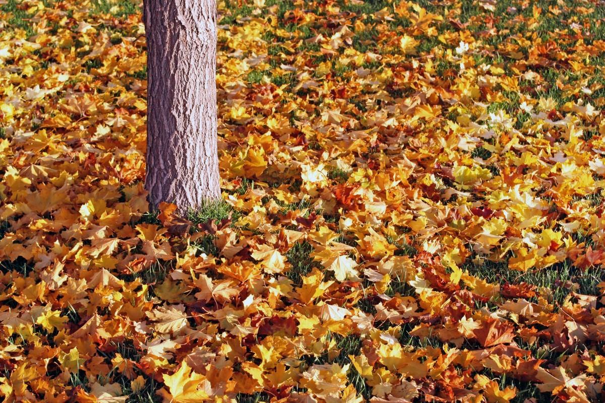 Деревья с опавшей листвой картинки