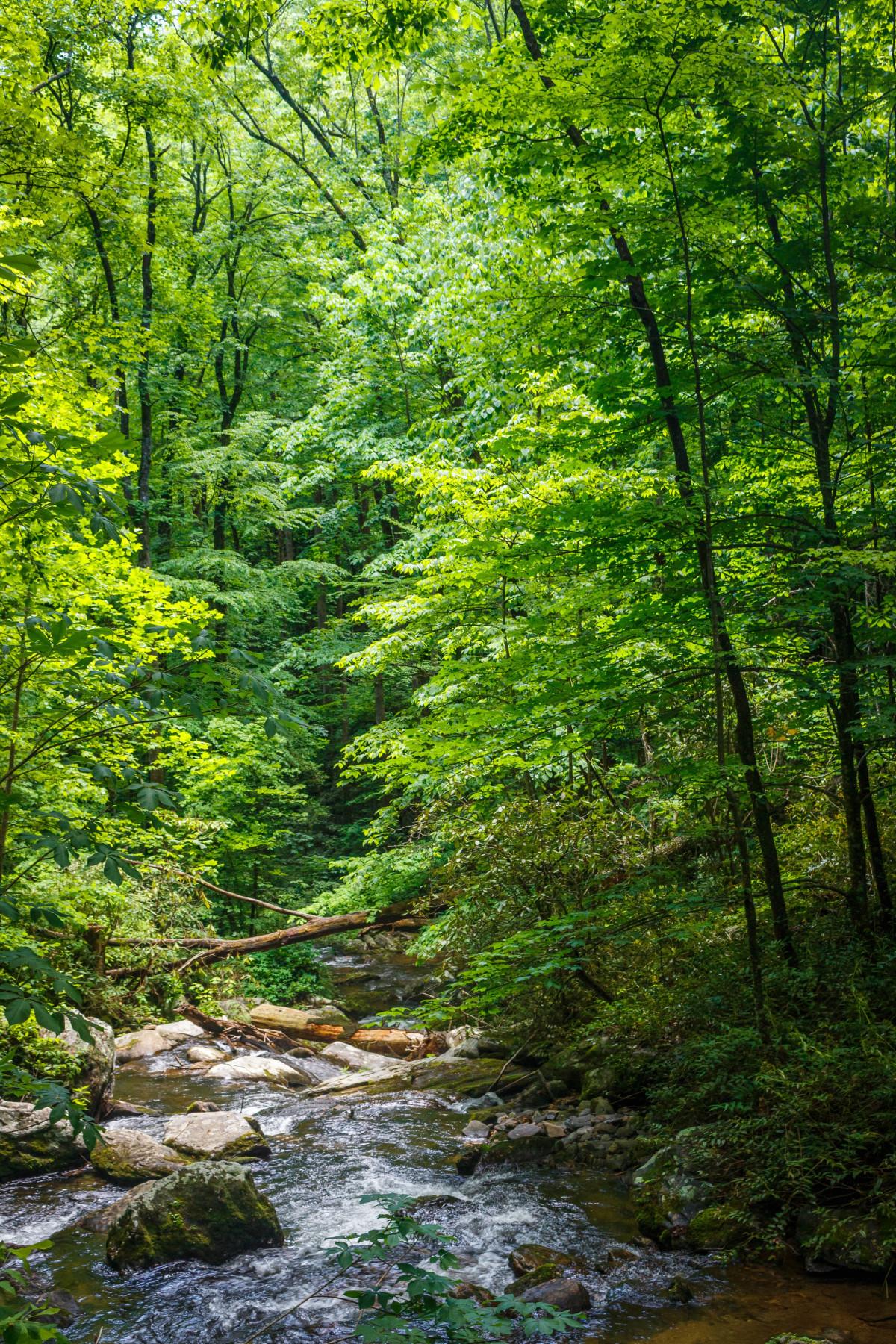 รูปภาพ : ต้นไม้, ความเป็นป่า, แม่น้ำ, กระแส, สีเขียว, ฤดูใบไม้ร่วง, พืชพันธุ์, ป่าฝน, ผลัดใบ ...