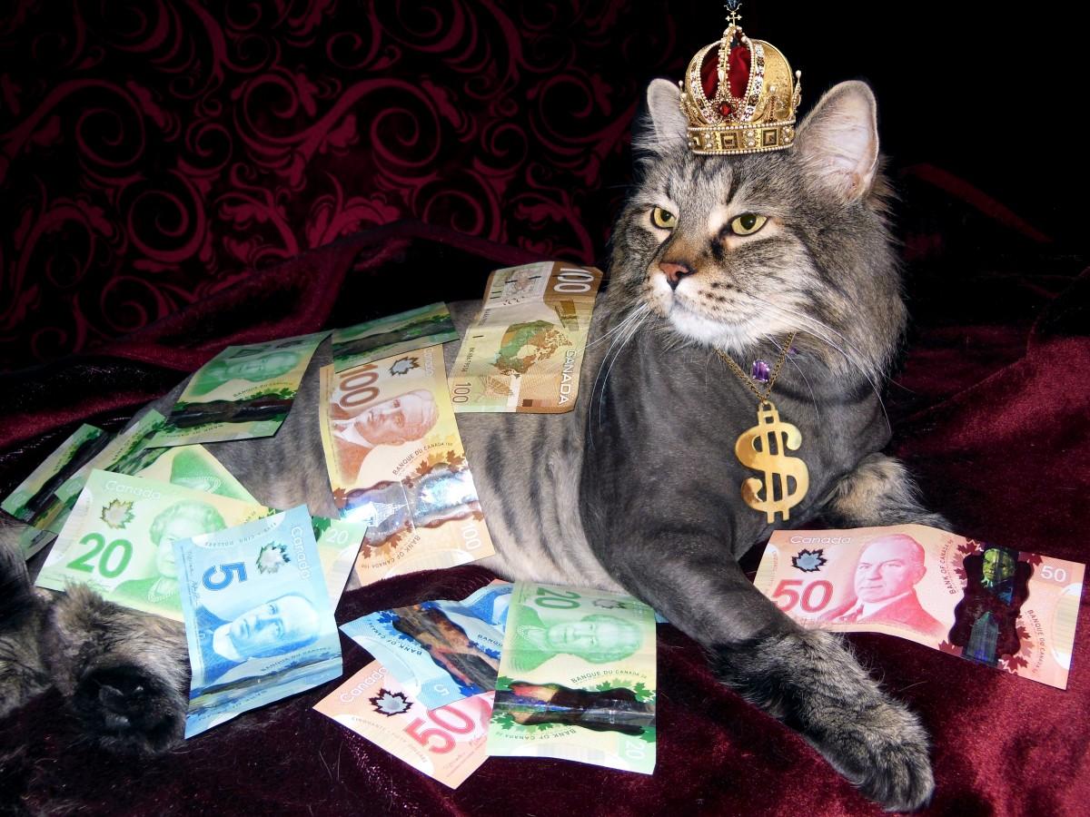 ลูกแมว แมว เงิน สัตว์เลี้ยงลูกด้วยนม สัตว์มีกระดูกสันหลัง ทรัพย์สมบัติ คนเปลือยกาย เงินของแคนาดา แมวขนาดเล็กถึงขนาดกลาง แมวเหมือนสัตว์เลี้ยงลูกด้วยนม