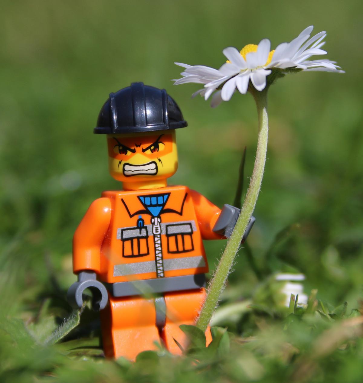 homme la personne Marguerite jaune jouet visage drôle humour expression Lego en colère stress émotion colère furieux frustration Homme jouet Visage énervé