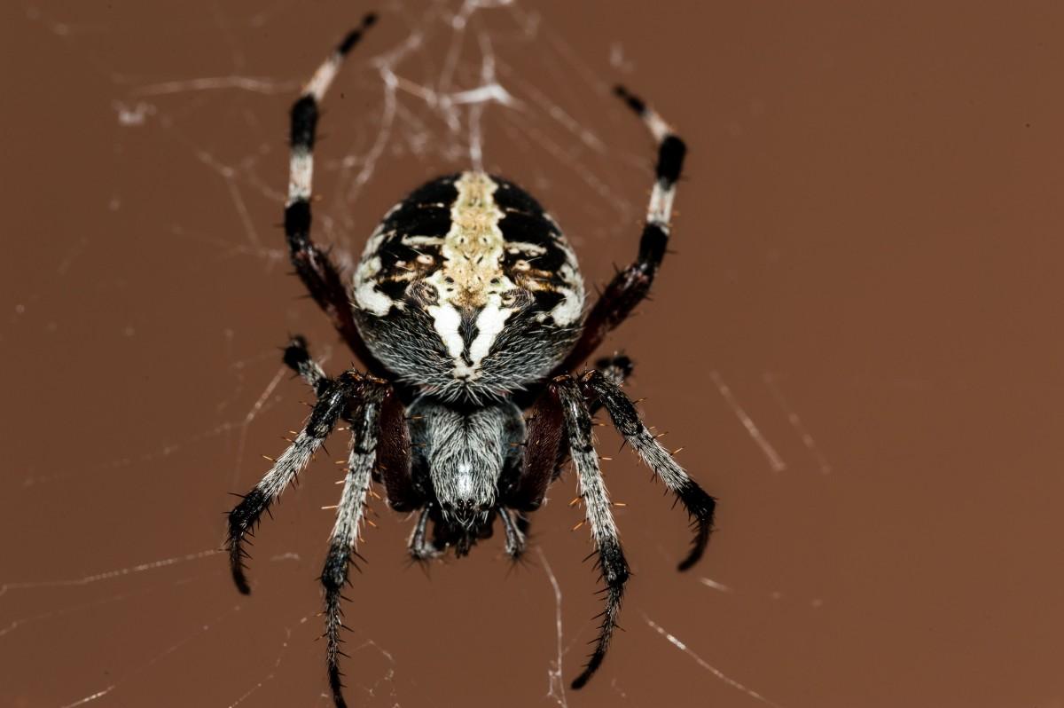 Укусил паук во сне – остерегайтесь интриг за спиной, сплетен, они могут серьезно повлиять на карьерный рост.