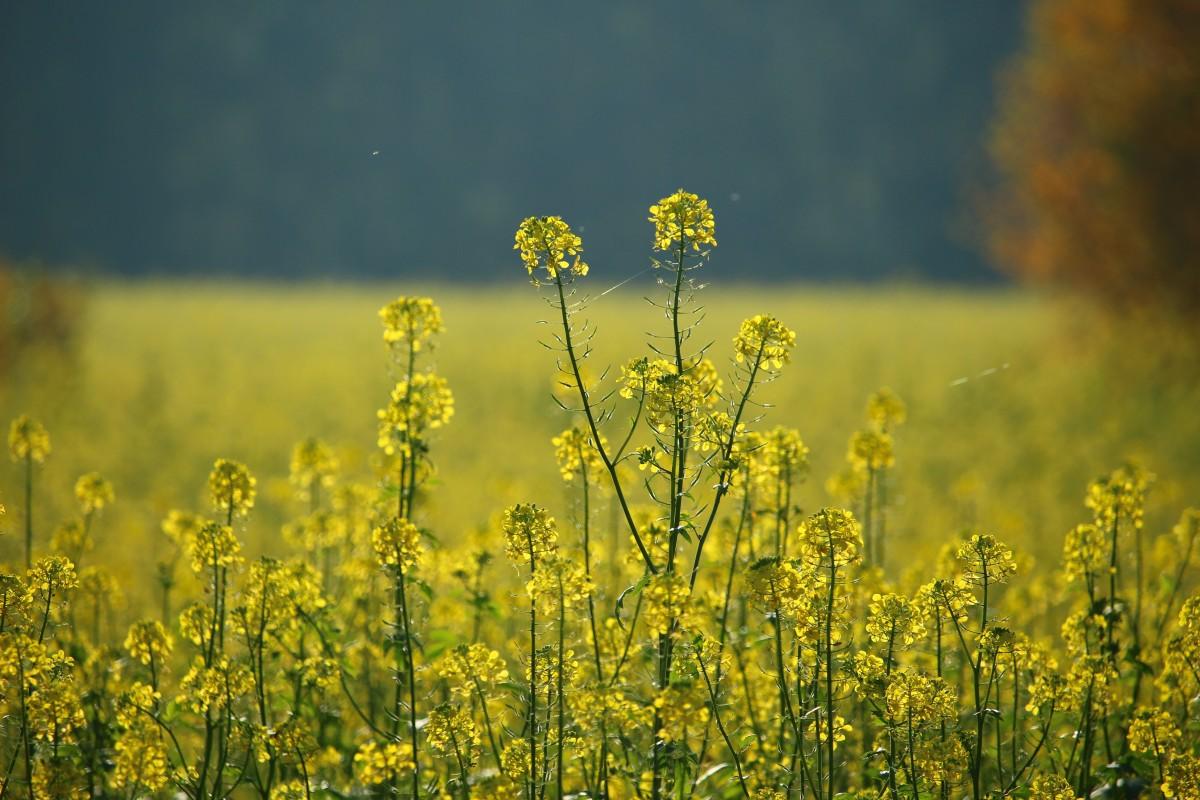 юридический полевые цветы рязанской области фото частные