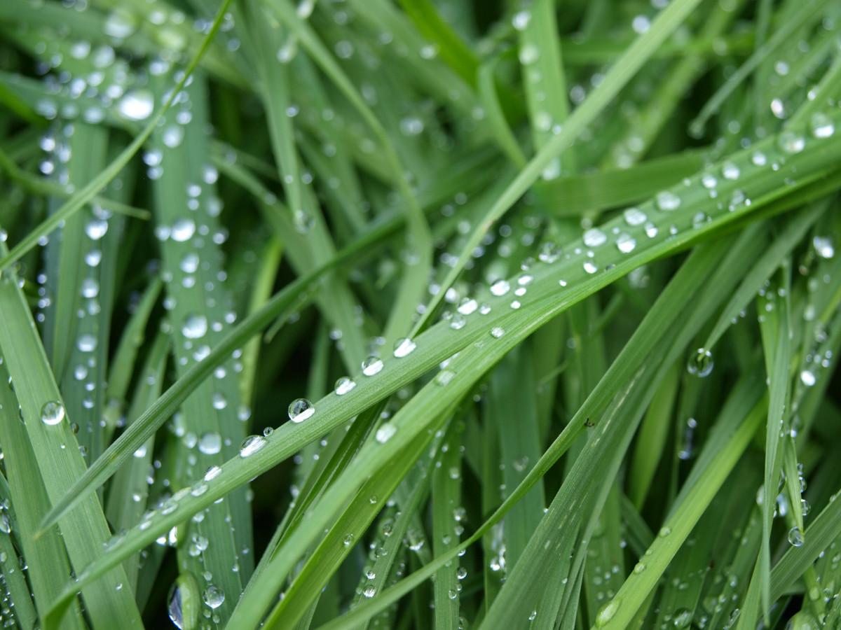 картинки трава с росинкой его окраина