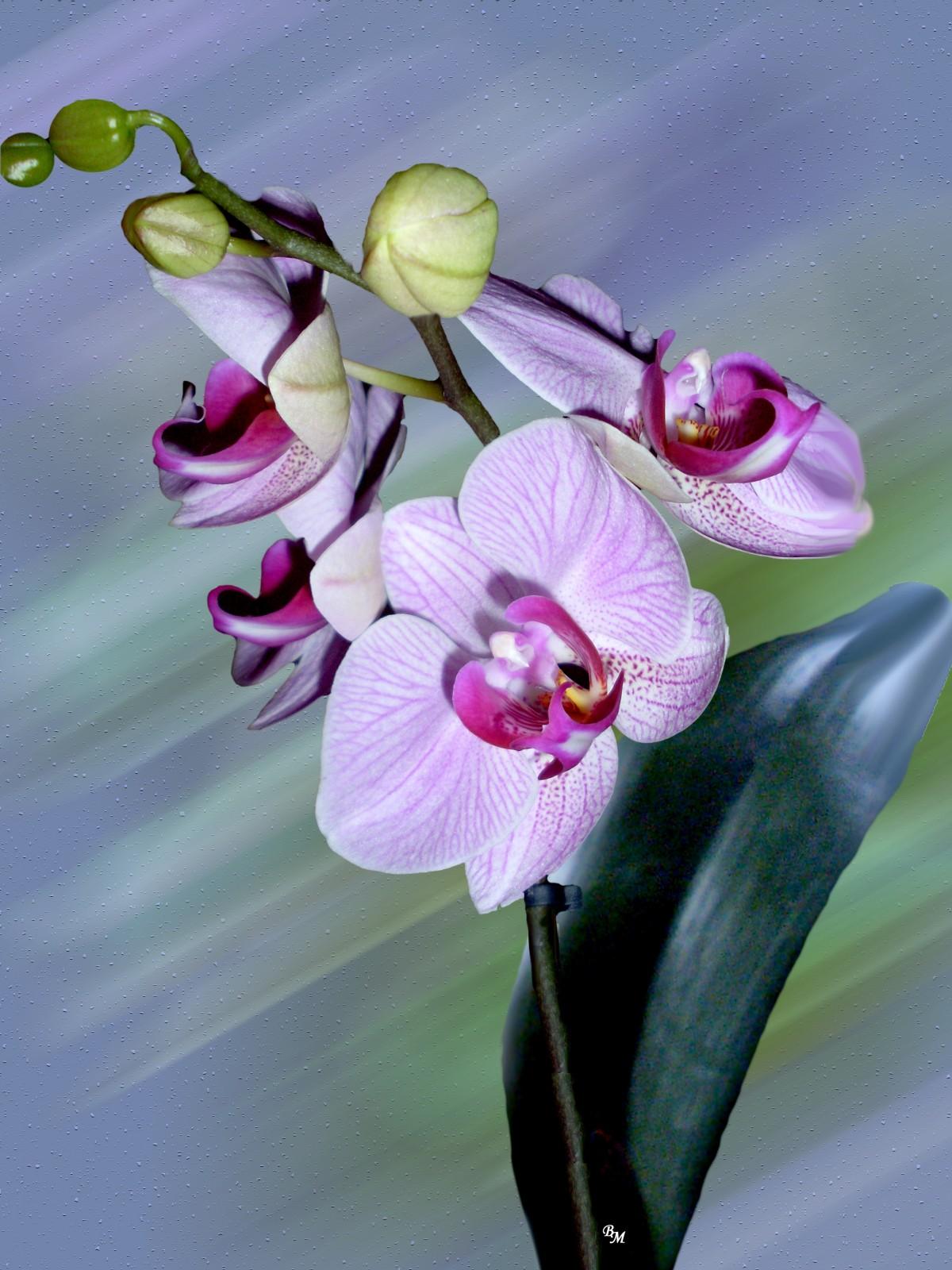 Открытка орхидеи фото, рисунки котов