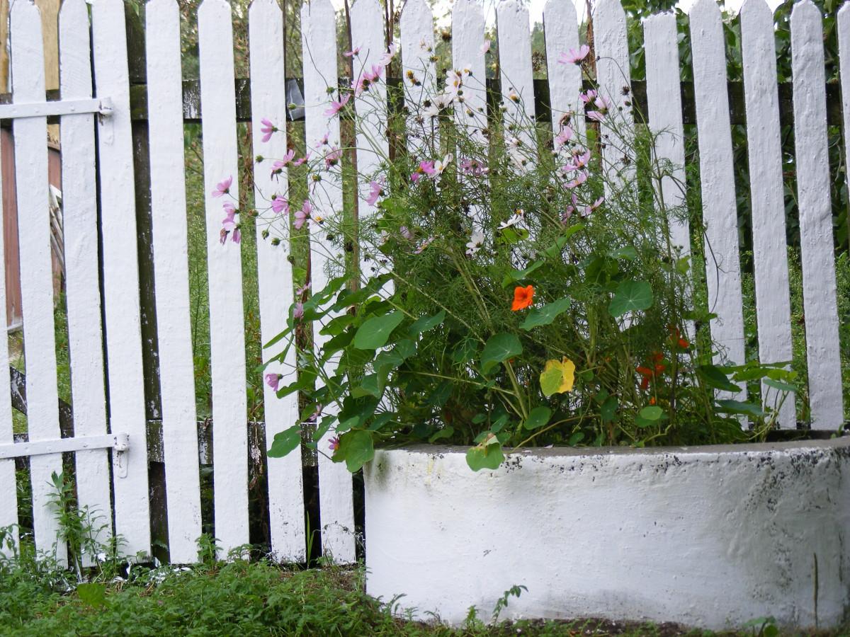 Bakgrundsbilder : träd, gräs, staket, vit, gräsmatta, blomma, vägg ...