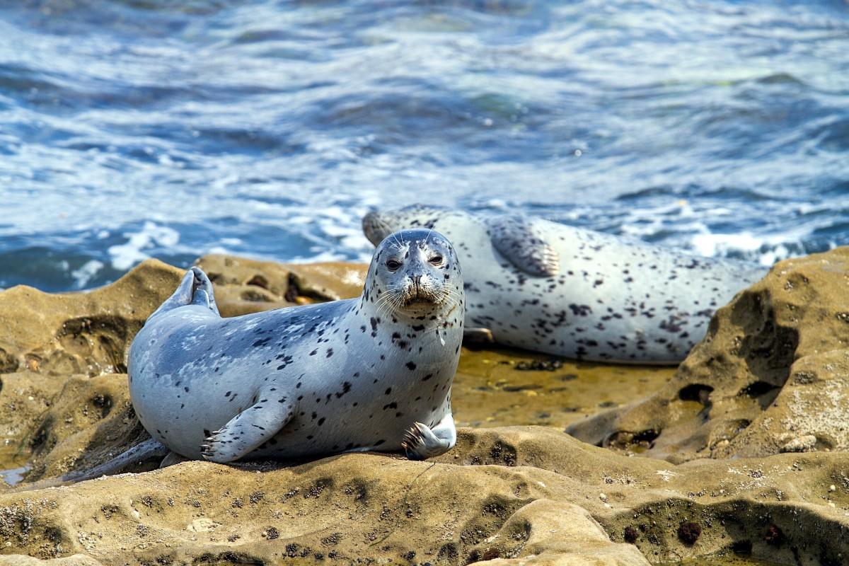Animales-de-agua-salada