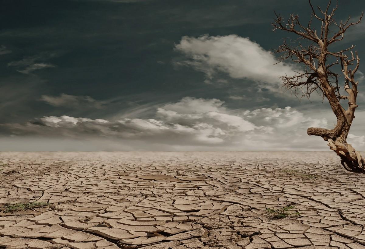 paisaje mar árbol naturaleza rock horizonte rama nube cielo luz de sol Mañana Desierto viento seco reflexión clima suelo agrietado tierra soledad caliente arcilla Grietas sequía yermo deshidratado devastado suelo arcilloso Fenómeno atmosférico