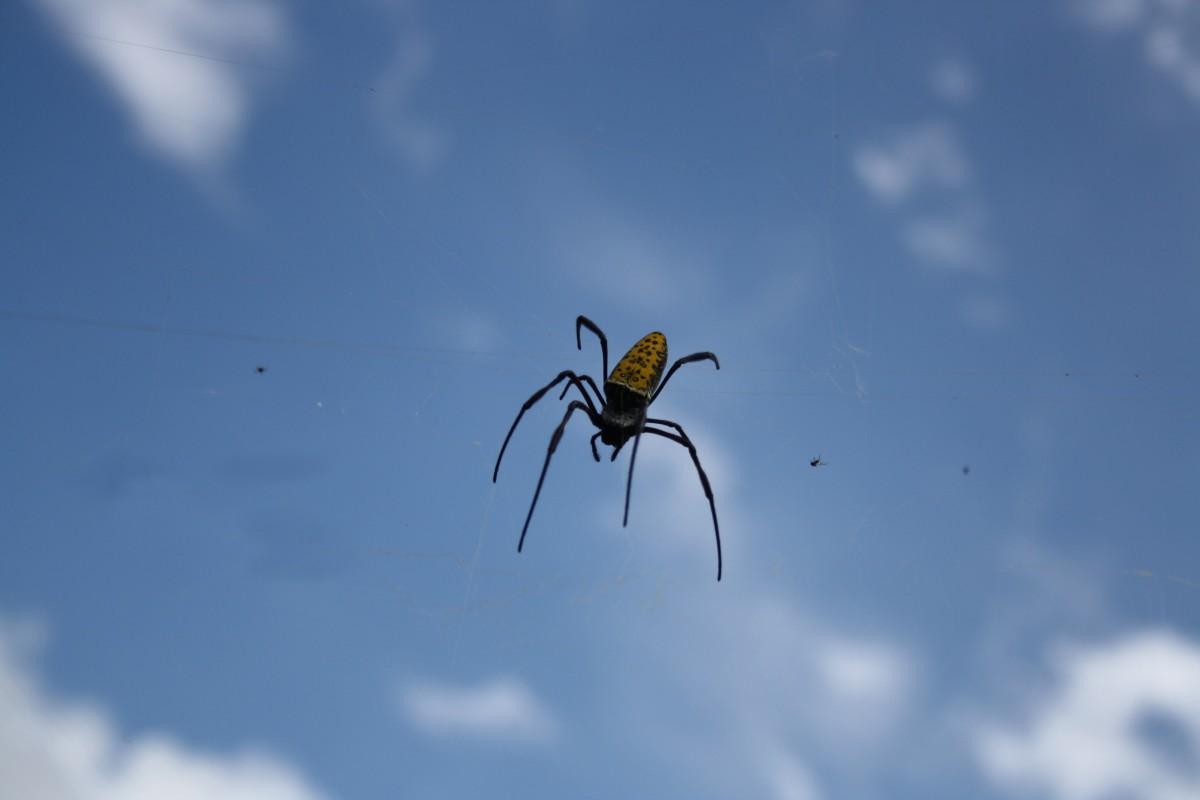 Летающие пауки картинка