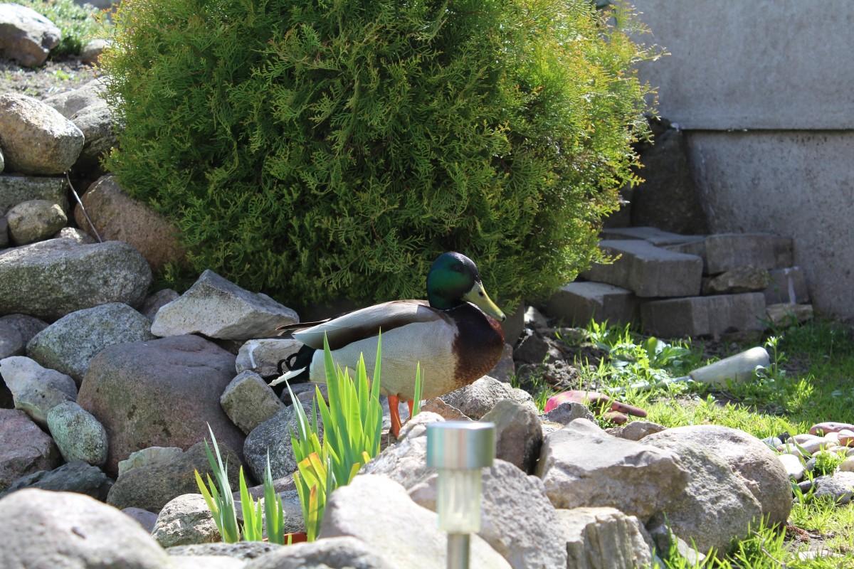 free images rock pond stream flowing backyard soil garden