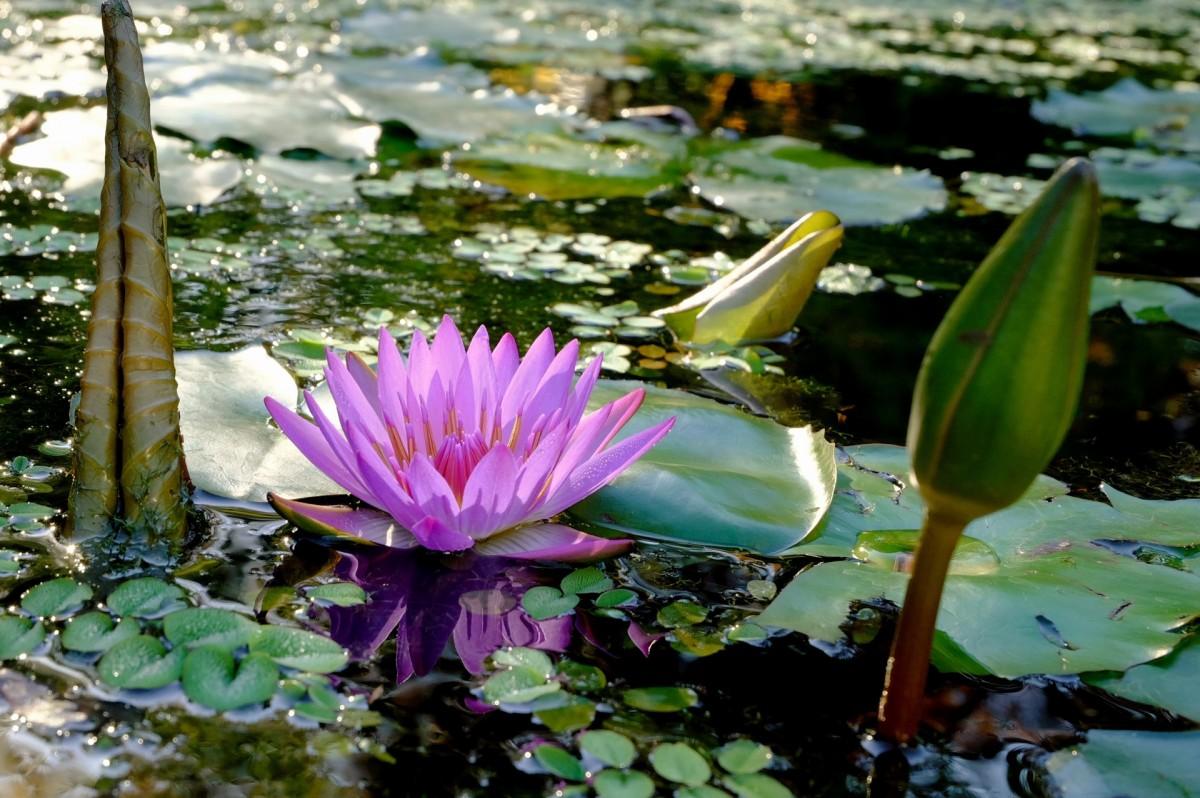доставки цветение водоема фото этого, служит средой