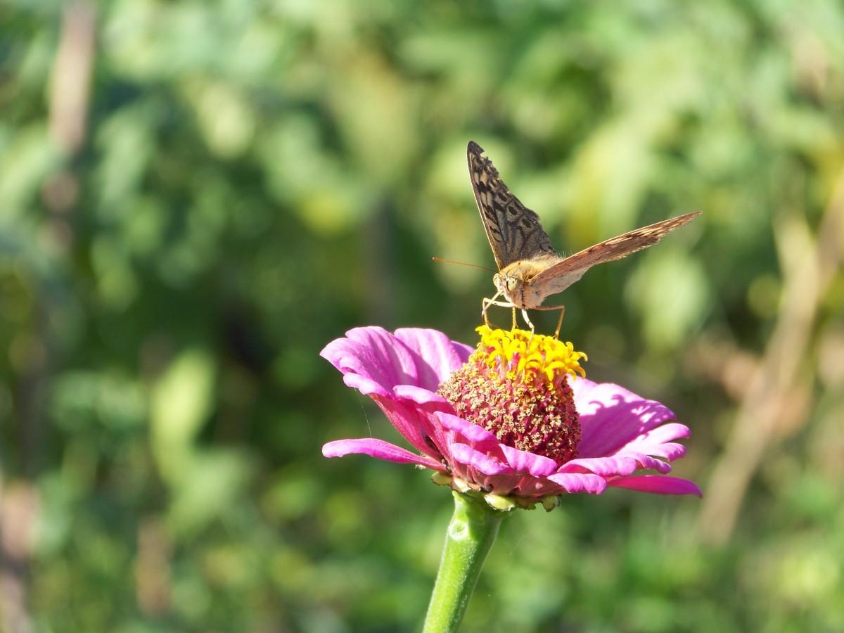 free images nature branch blossom bird flower wildlife