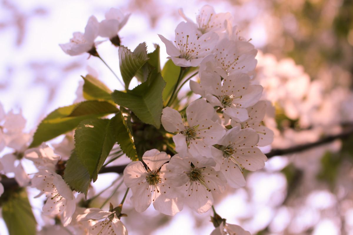 весна время расцветать картинки таким
