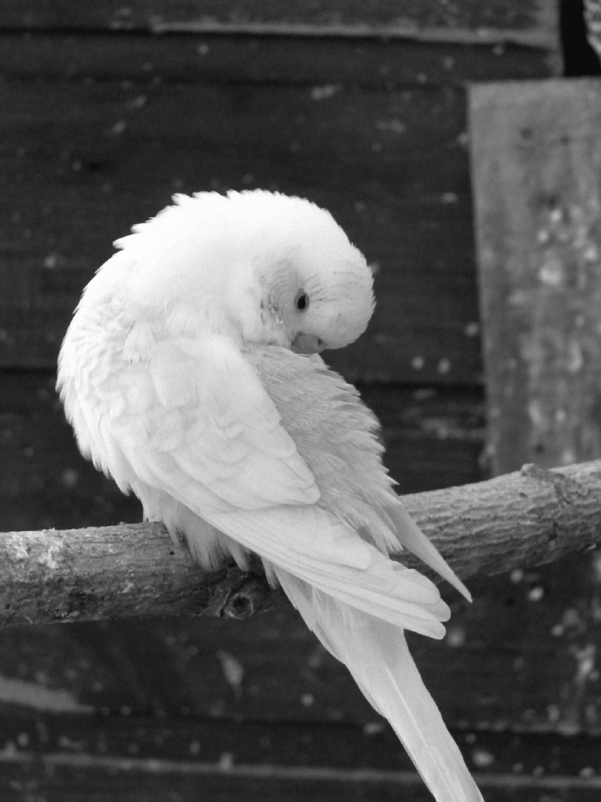 Free Images Wing Black And White Beak Toilet Blue Rest Fauna Birds Sleep Vertebrate