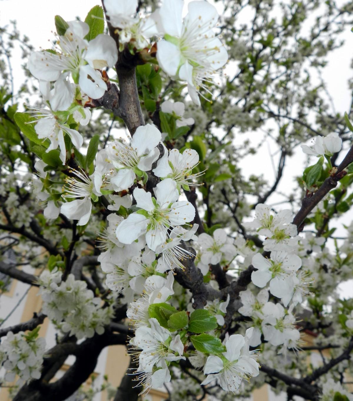 Что посадить на 6 сотках: деревья, растения, кустарники и цветы 75