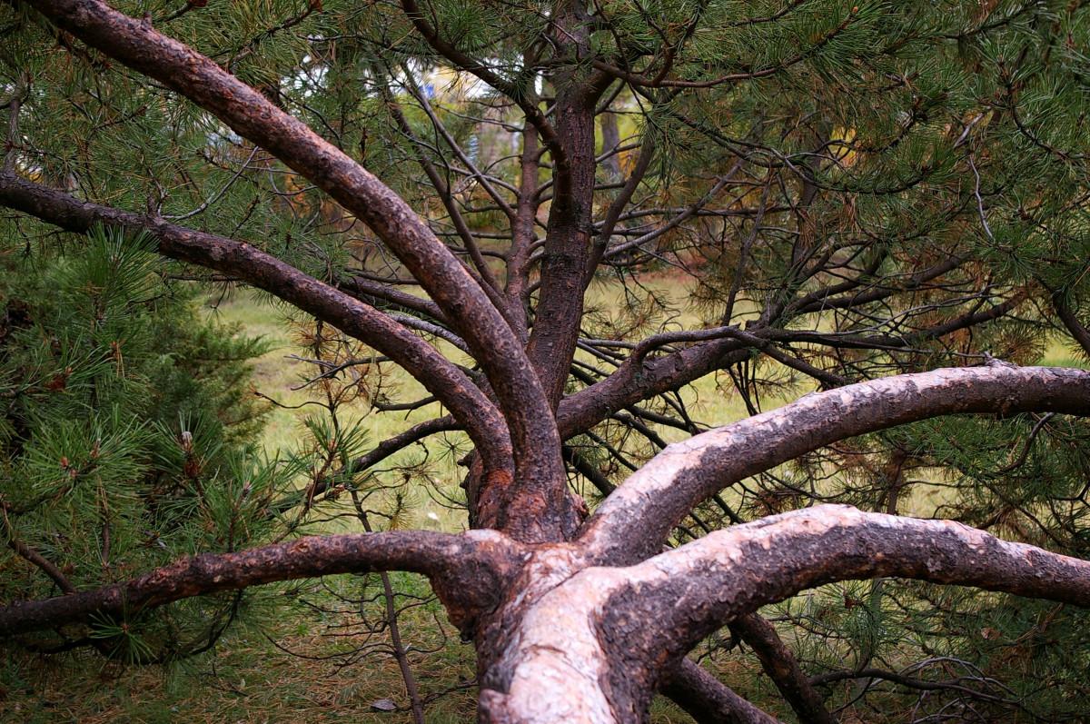 images gratuites arbre la nature plante tronc corce b che la grotte jungle racine. Black Bedroom Furniture Sets. Home Design Ideas