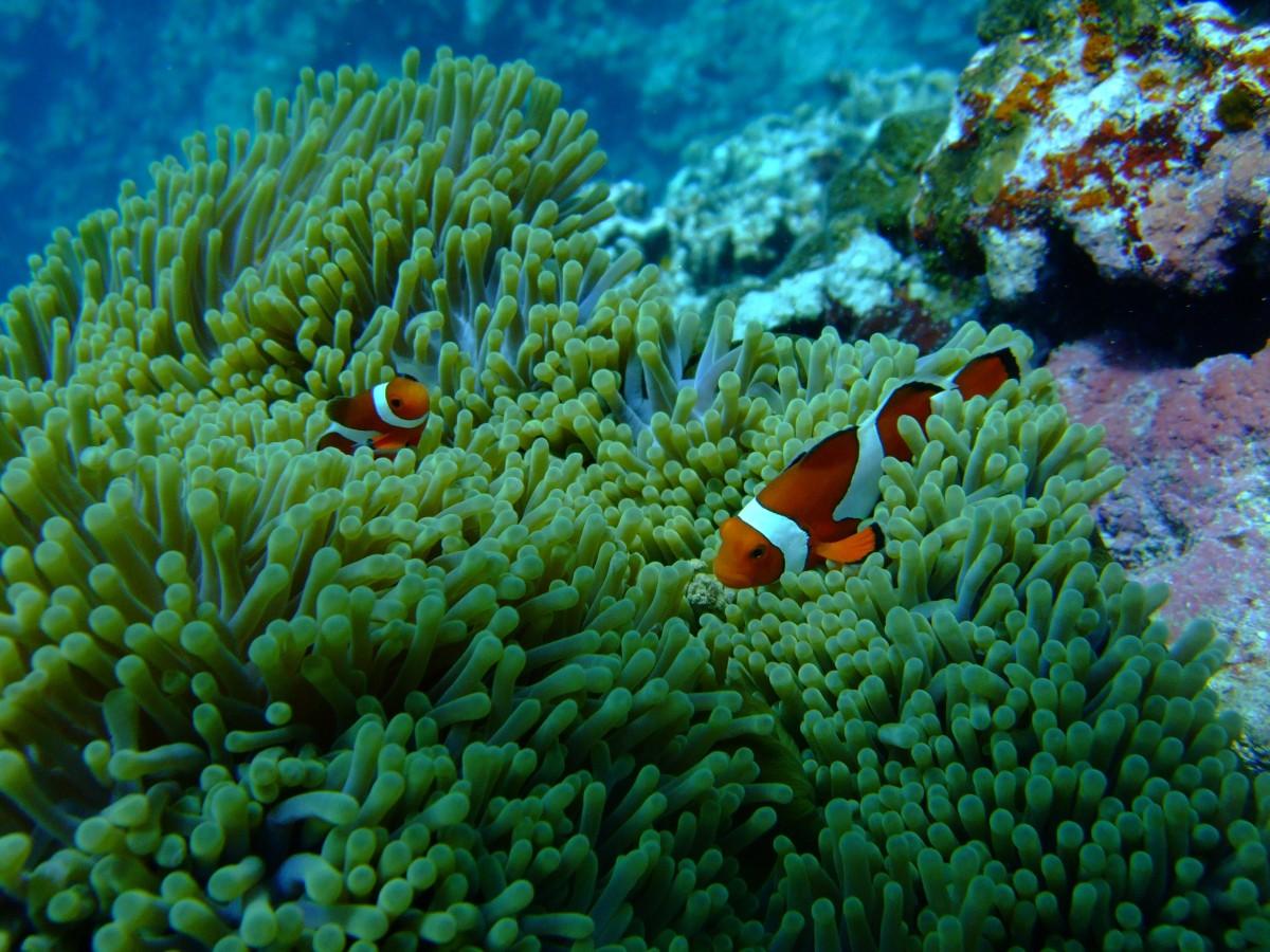 homework button nemos reef