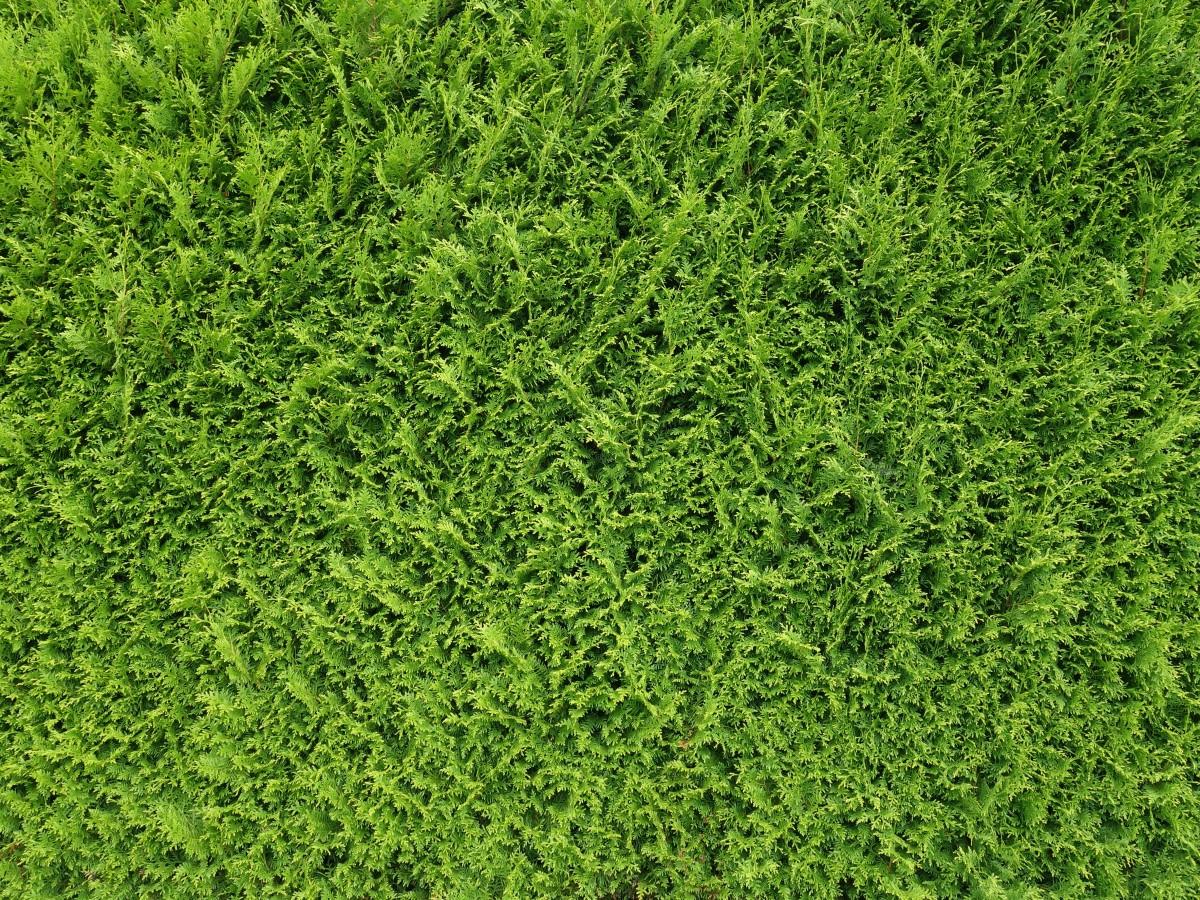 Images gratuites la nature herbe structure plante champ pelouse feuille mousse buisson - Quand planter de la pelouse ...