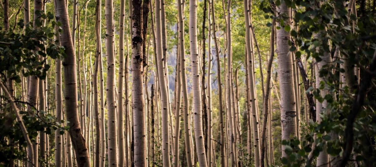 images gratuites arbre branche cl ture tronc jungle for t tropicale zone humide bosquet. Black Bedroom Furniture Sets. Home Design Ideas