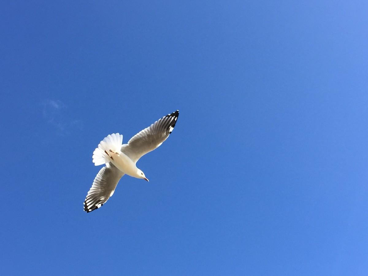 животное картинки белая птица в небе изображения металл