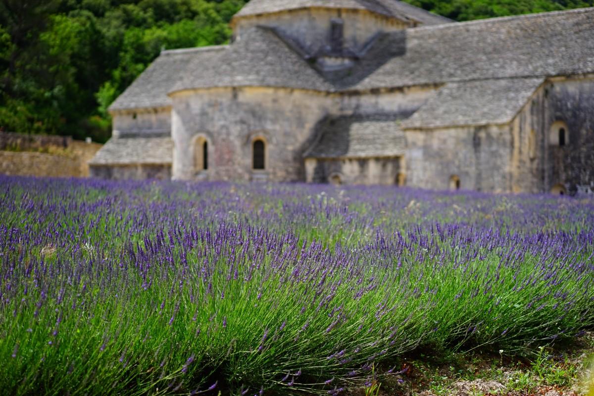 luonto, ruoho, arkkitehtuuri, kasvi, ala, nurmikko, niitty, preeria, kukka, violetti, rakennus, kesä, Ranska, aromi, vihreä, yrtti, sato, kasvitiede, sininen, kirkko, maatalous, puutarha, kasvisto, laventeli, wildflower, kukat, luonnonvaraisten kasvien, Ranskan kieli, vuode, terälehdet, koriste-, violetti, luostari, laventeli kenttä, provence, luostarikirkko, metsä, tuoksuva, yrtit, kukka niitty, tuoksu, aromaattinen, Vaucluse, lääkekasvi, maaseutu, kukinto, kesäkukkia, puutarhan kukat, mökki puutarha, gordes, kasvi, Lamiaceae, osasto Vaucluse, laventeli kukka, laventelin kukkia, laventeli viljely, WildBlue, true laventeli, kapea lehtiä laventeli, tähkälaventeli, Lavandula officinalis, Lavandula vera, tuoksuva kasvi, homeopatia, laventeli niitty, Lavendula, abbaye de n nanque, Notre Dame de n nanque, järjestystä Cistercians, sistersiläismunkki munkit, s nanque Abbey, zisterzienser, luostarikirkko, ruoho perhe, land kasvi, englanti laventeli