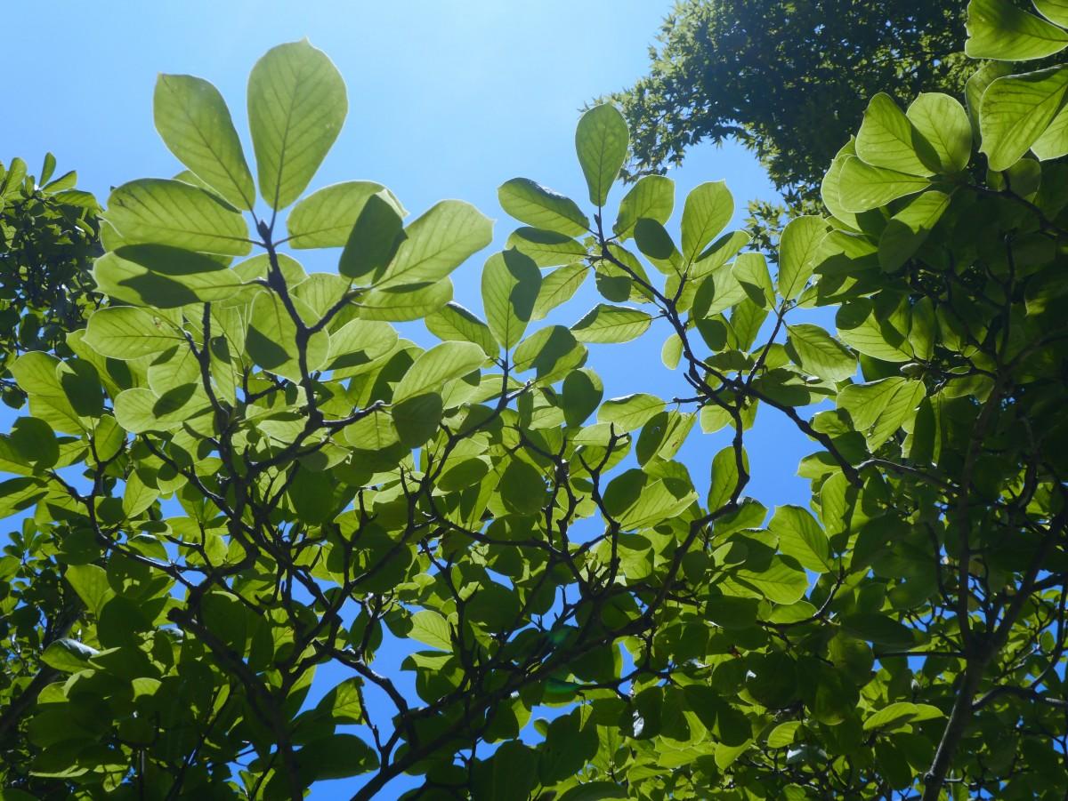 images gratuites arbre la nature branche fleur nuage route lumi re du soleil feuille. Black Bedroom Furniture Sets. Home Design Ideas