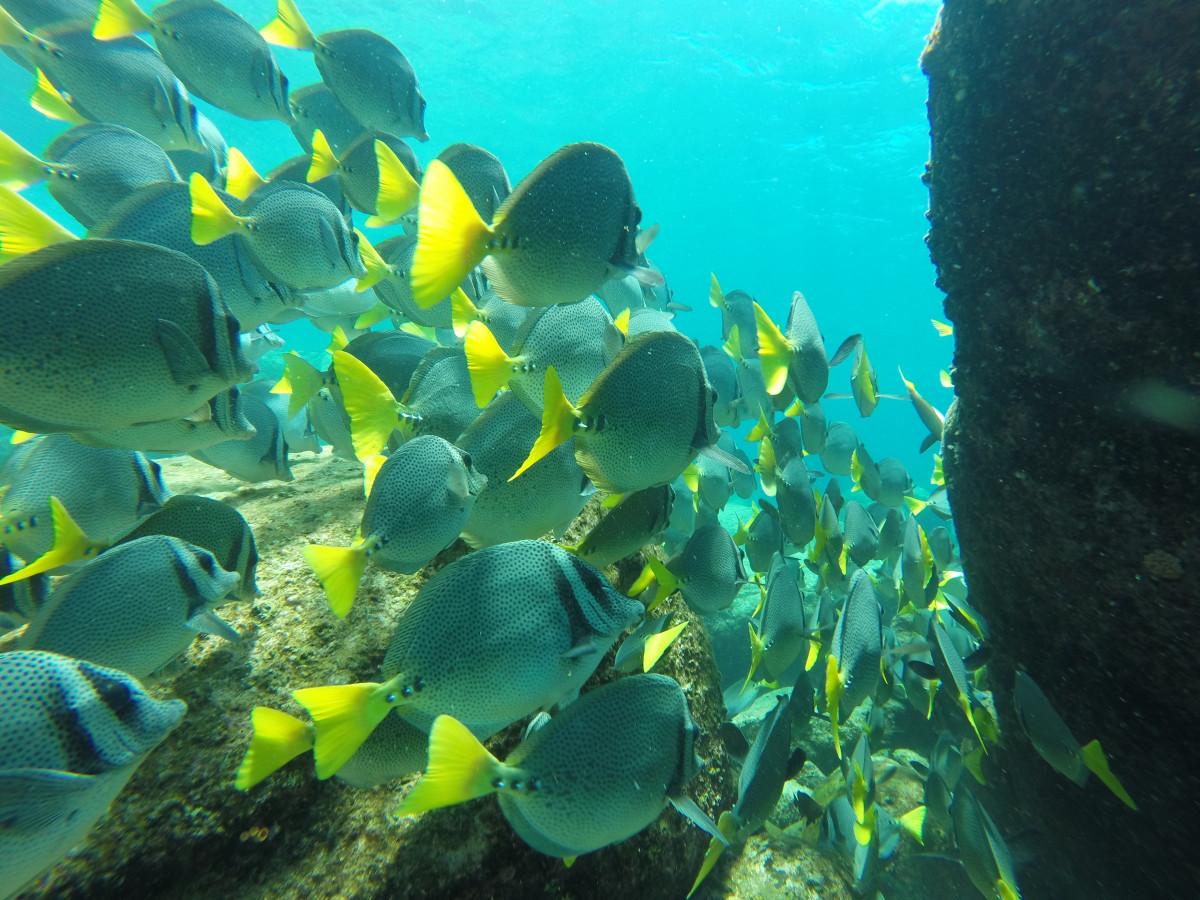free images animal underwater seaweed colorful coral reef