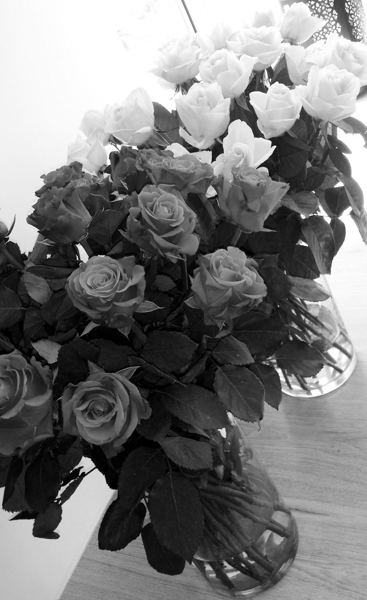 Images Gratuites : fleur, noir et blanc, la photographie, pétale, Floraison, amour, cadeau, Rose ...