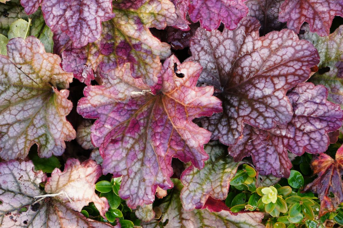Images gratuites la nature feuille fleur rouge herbe for Plante 9 feuilles