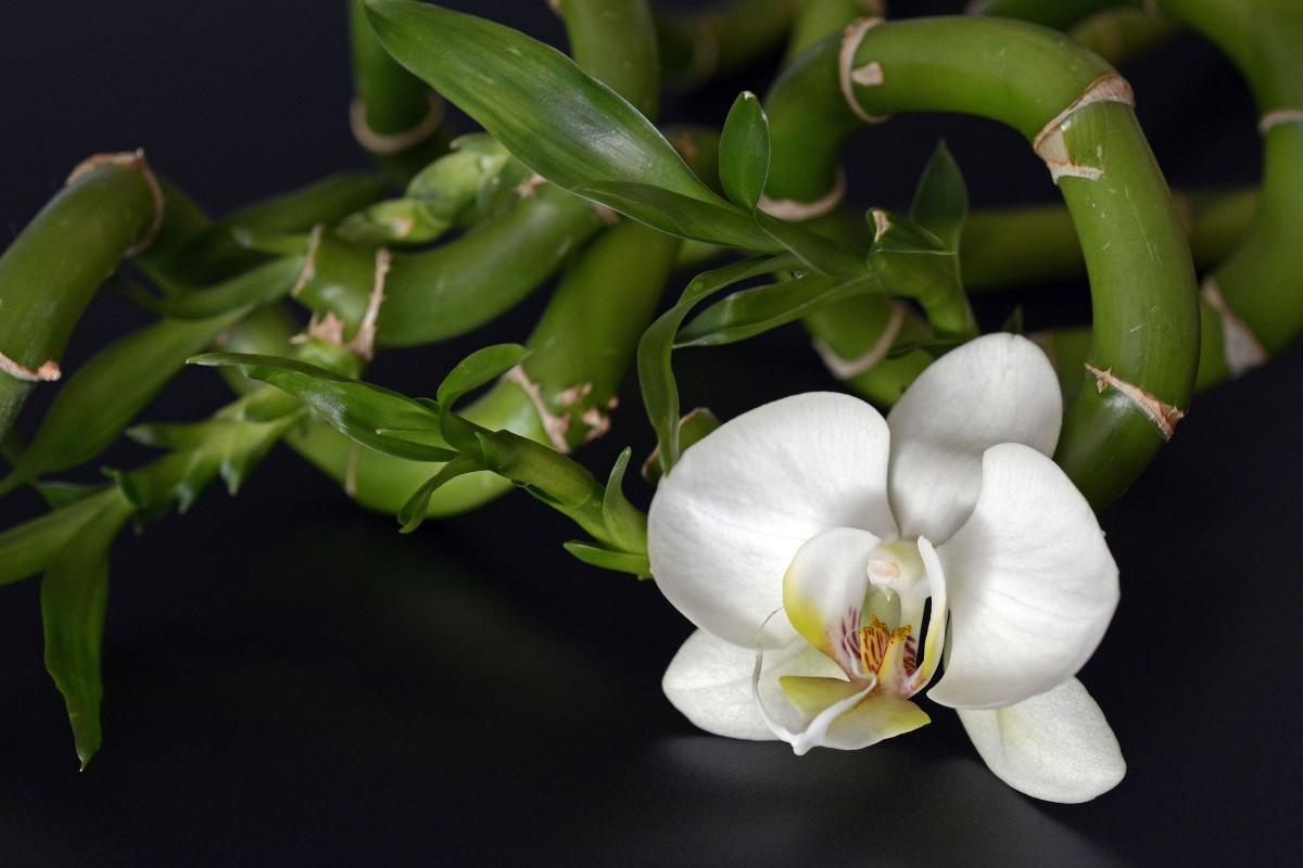 Free Images : plant, petal, relax, balance, black, close ... Black Stone Flower