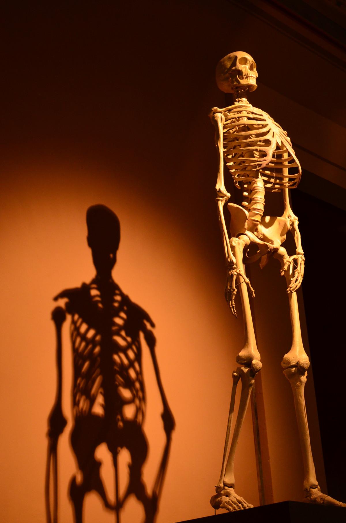 Kostenlose foto : Monument, Statue, Modell-, Biologie, Rahmen ...